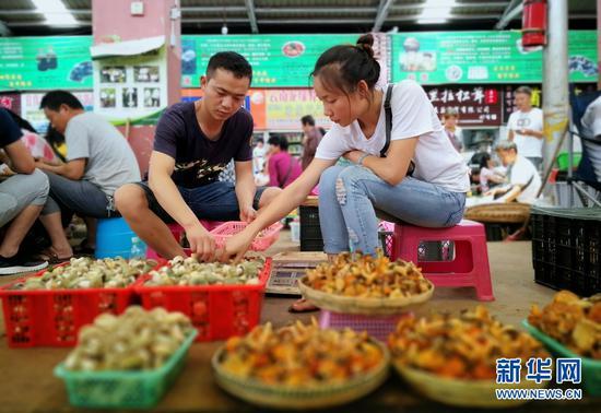 云南木水花野生菌交易中心,各类新鲜的菌子集中到这里进行销售。新华网 普凡 摄