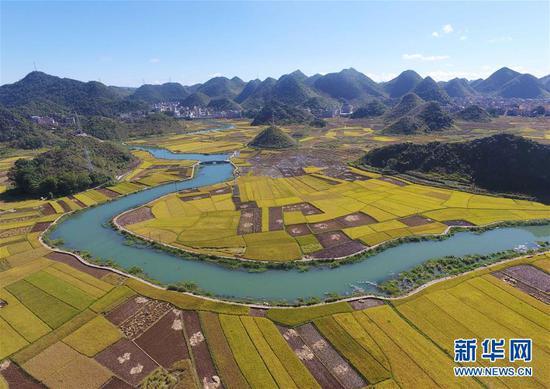 这是广南县八宝镇坝龙村的稻田景色(9月20日无人机拍摄)。