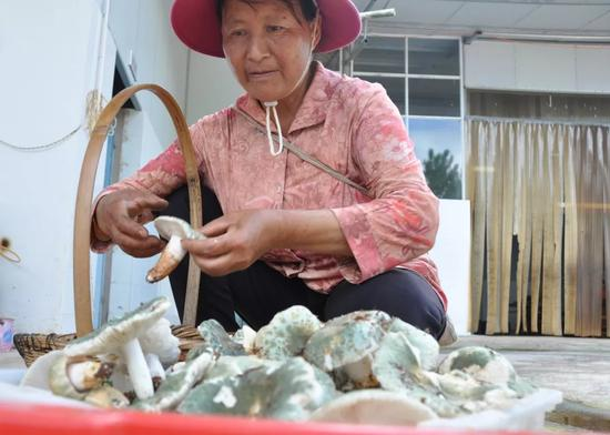 ▲交售野生菌的村民