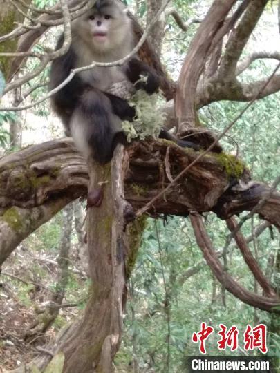图为四丁抱着婴猴 白马雪山野生动物救护站供图