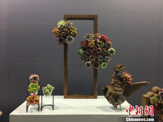 图为昆明国际花卉展上用多肉植物制作的装饰摆件 陈静 摄