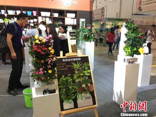 图为昆明国际花卉展现场展示的智能迷你植物墙 陈静 摄