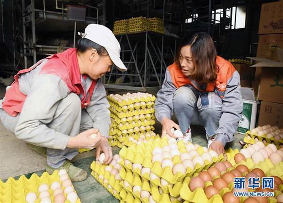 农家女外出务工多年后返乡创业 靠养鸡脱贫