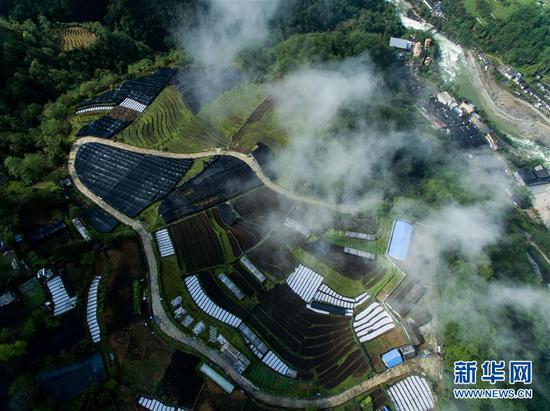 这是独龙江乡种植羊肚菌的农田(4月18日无人机拍摄)。