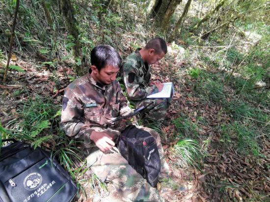 云南哀牢山国家级自然保护区镇沅管护局野生动物监测显成效