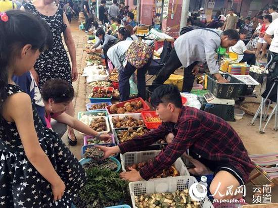 云南最大的野生菌交易市场——木水花野生菌市场热闹非凡。摄影:徐前