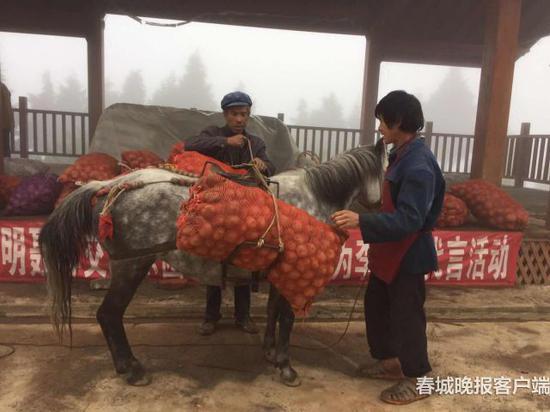 村民冯存喜在村子戏台卖洋芋