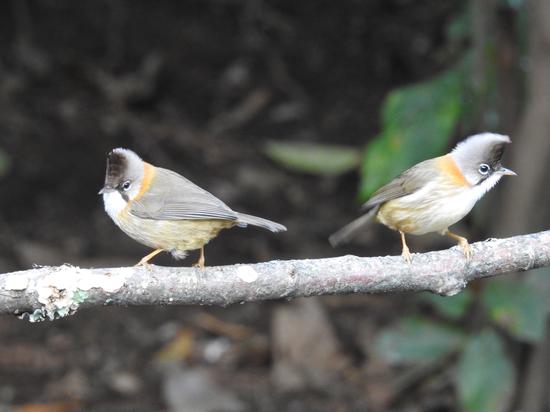 高黎贡山鸟类摄影图(图源:高黎贡山旅游度假区管委会)