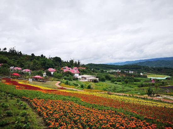 (临翔鲜花盛开的村庄——腾龙村)