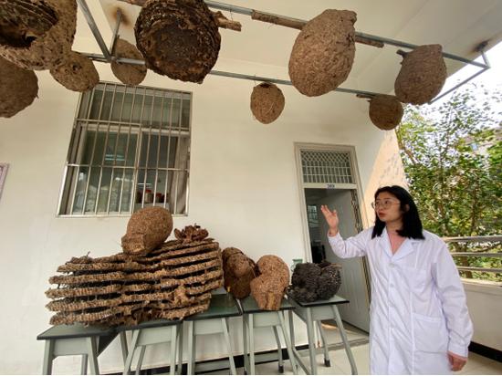 胡蜂蜂巢养殖助农项目