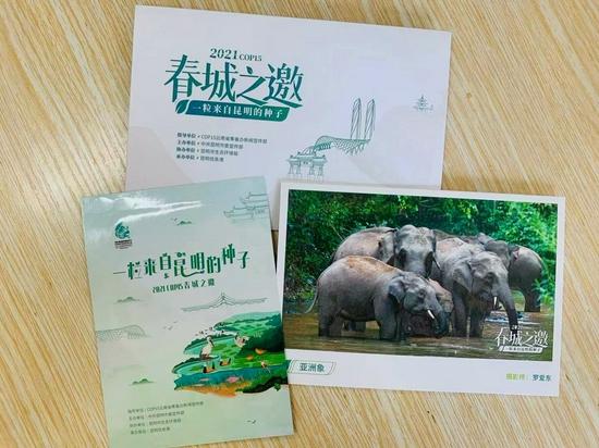 李女士收到亚洲象明信片 李韵摄