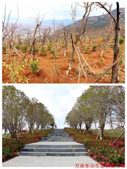 万亩东山生态恢复工程