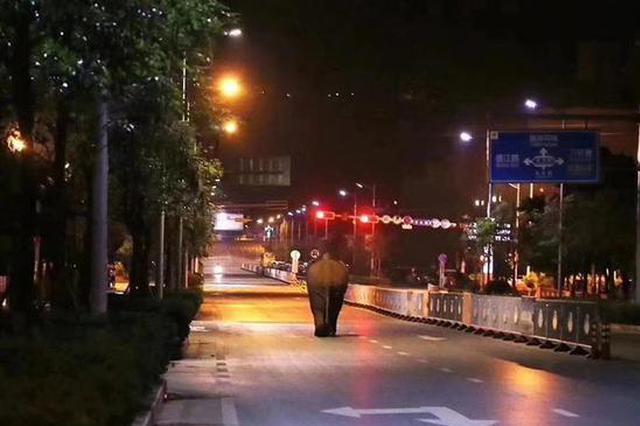 云南普洱:野象夜闯思茅市区被控制