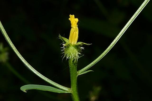 """5种新植物登上种子""""诺亚方舟"""""""