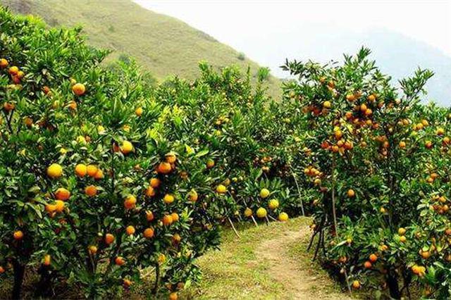 云南玉溪6个农产品被认定为地理标识产品