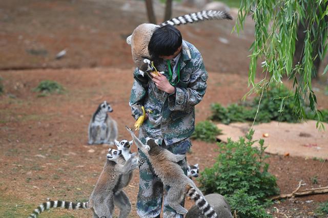 视频:云南野生动物园喜添新丁