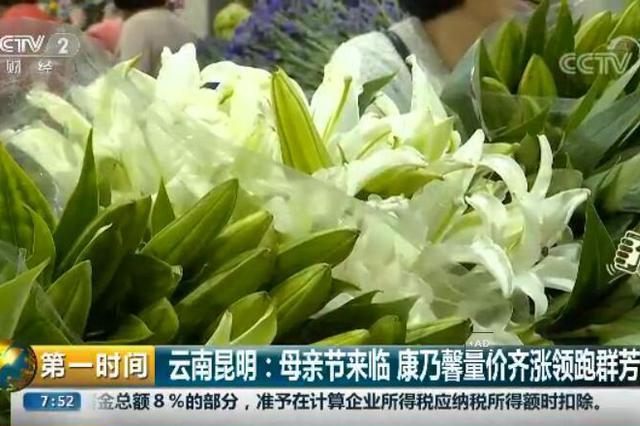 视频︱母亲节昆明康乃馨量价齐涨