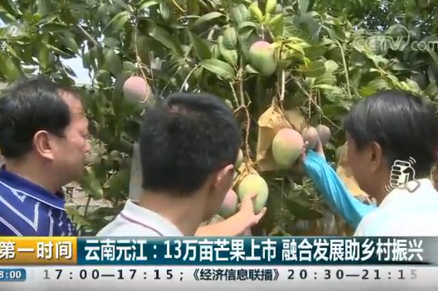 云南元江:13万亩芒果上市 融合发展助乡村振兴