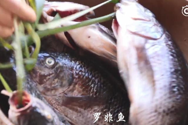 视频丨尝尝云南味道:香茅草烤鱼