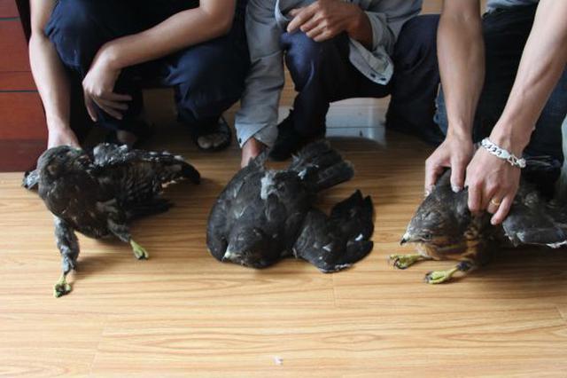 """丽江一男子捡到3只小鸟 """"养不起""""在朋友圈公然售卖"""