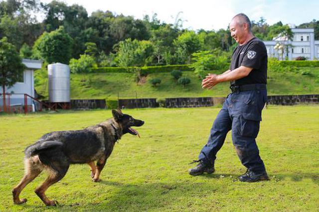 嗨,警犬! 走近云南普洱市公安战线上的特殊战士