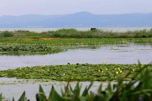 组图丨今年前8月昆明滇池水质总体保持Ⅳ类