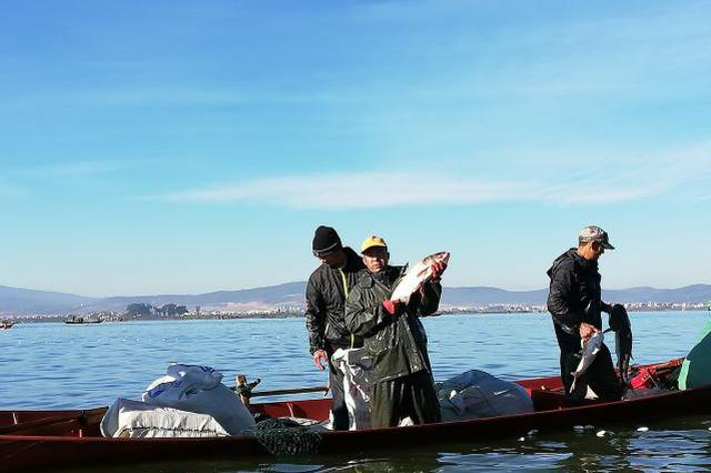 视频|江川星云湖湖鲜已打捞上岸!快来尝鲜吧
