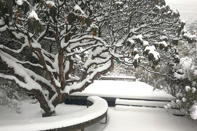 旅游|昆明欠你的雪 轿子雪山全还给你!