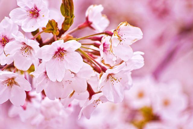 视频丨三月趟春风 为你盘点云南看花地