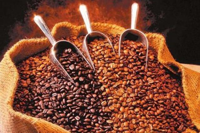 卢寒:云南本土咖啡需要对接国际市场