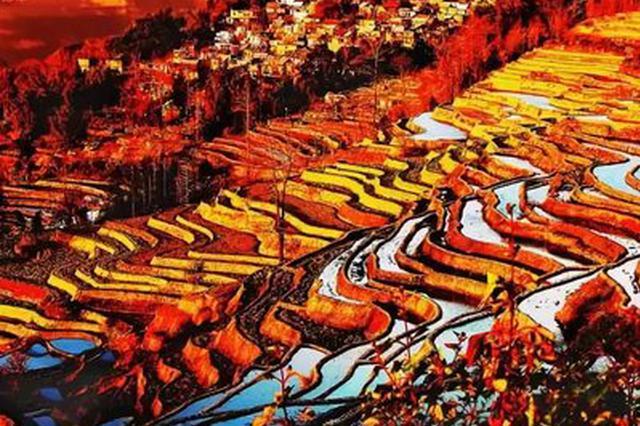 视频丨红河哈尼梯田:一山分四季 十里不同天