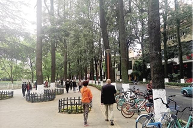 19日,新闻路一棵树龄超30年、胸径超50厘米的银桦树被大风吹倒。
