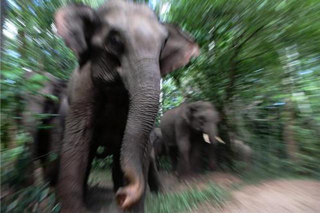 单身象的愤怒:野象找不到女友 进村疯狂踹车毁房