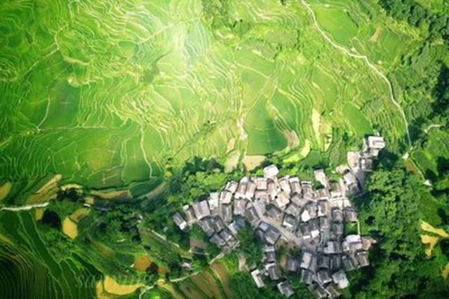 视频丨云南元阳最古老的蘑菇房:阿者科古村落