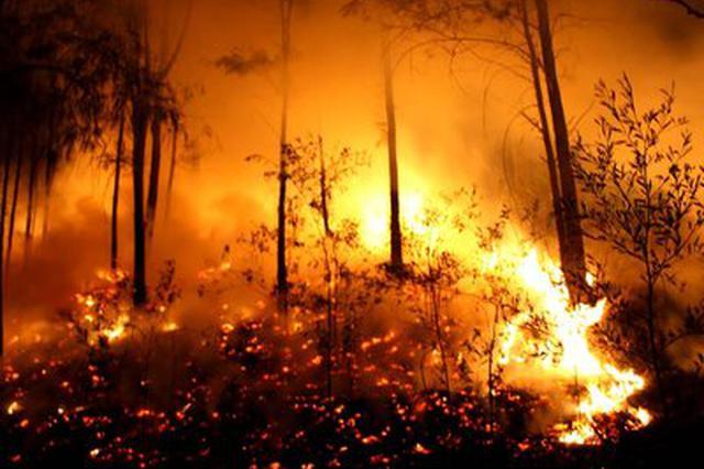 云南省发生森林火灾41起 受害森林面积290.5公顷