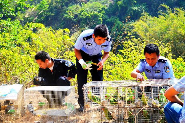 龙陵警民10年救助野生动物逾2000只