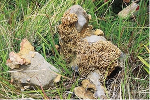 这些怪石头来自3亿年前!建水青龙镇发现古生物化石带