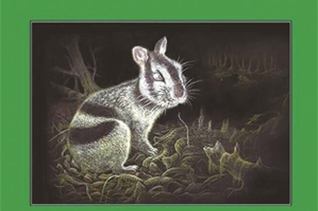 兔子祖先? 昭通发现600万年前条纹兔化石