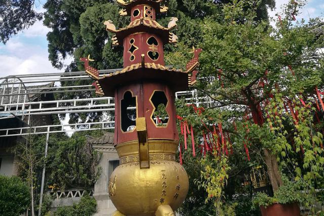 云南保山在历史文化名城建设中着力保护古树名木