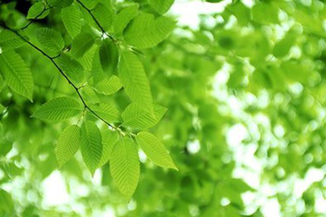 绿色发展的普洱作为