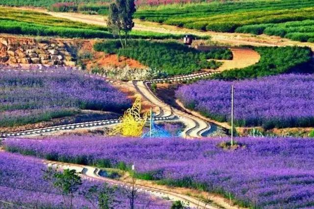 旅游丨云南这里竟藏着一个浪漫到极致的薰衣草庄园