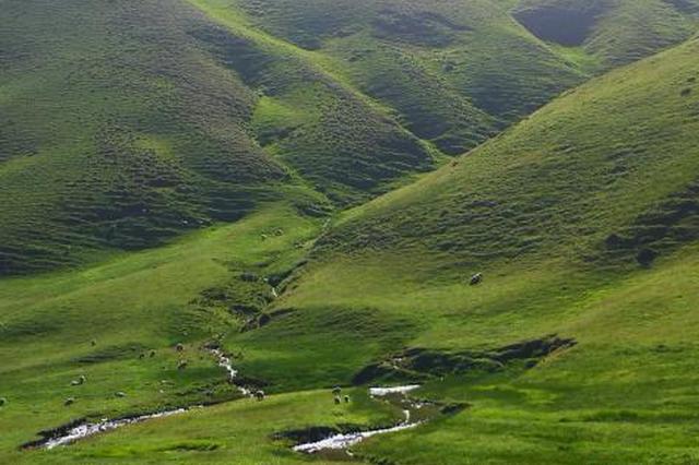 云南的山地草甸 云南省林业和草原局局供图