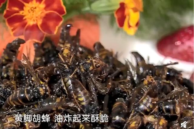 美食丨云南重口味蜂蛹宴 可炖可炸还能蘸芥末生吃