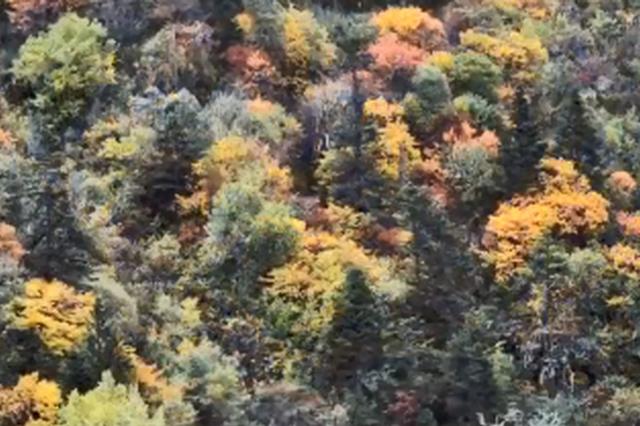 视频丨秋冬的香格里拉 用语言都形容不出她的美