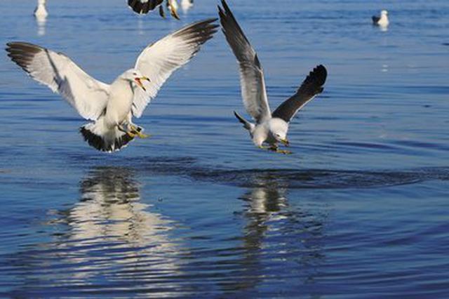 旅游丨海鸥和昆明冬天温暖的阳光更配哦