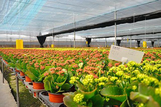 晋宁将建国际花卉电商物流中心