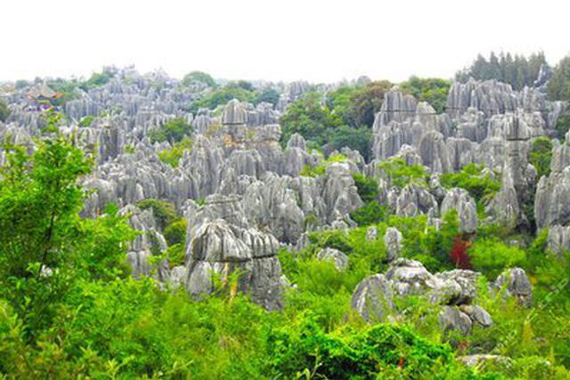 石林抗疫山歌小调响遍全县399个自然村