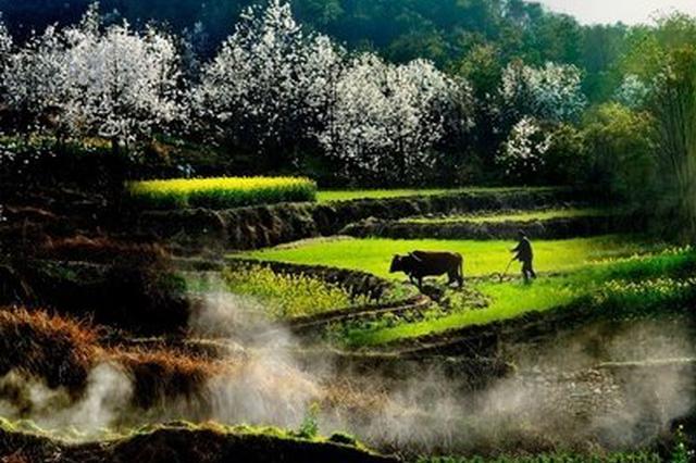 云品丨大理州农业产业化龙头企业大多数已复工生产