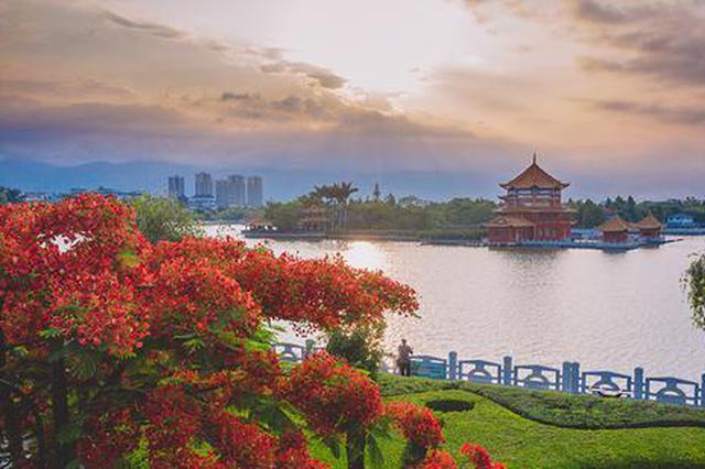高清图丨云南蒙自:锦簇花团红似火 凤凰花开红满城