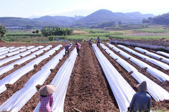 云品丨边陲孟定:每年三季蔬菜种植带动农民增收